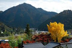 山村 photo