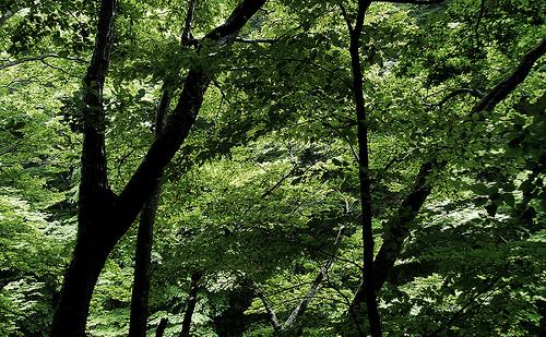 森 photo