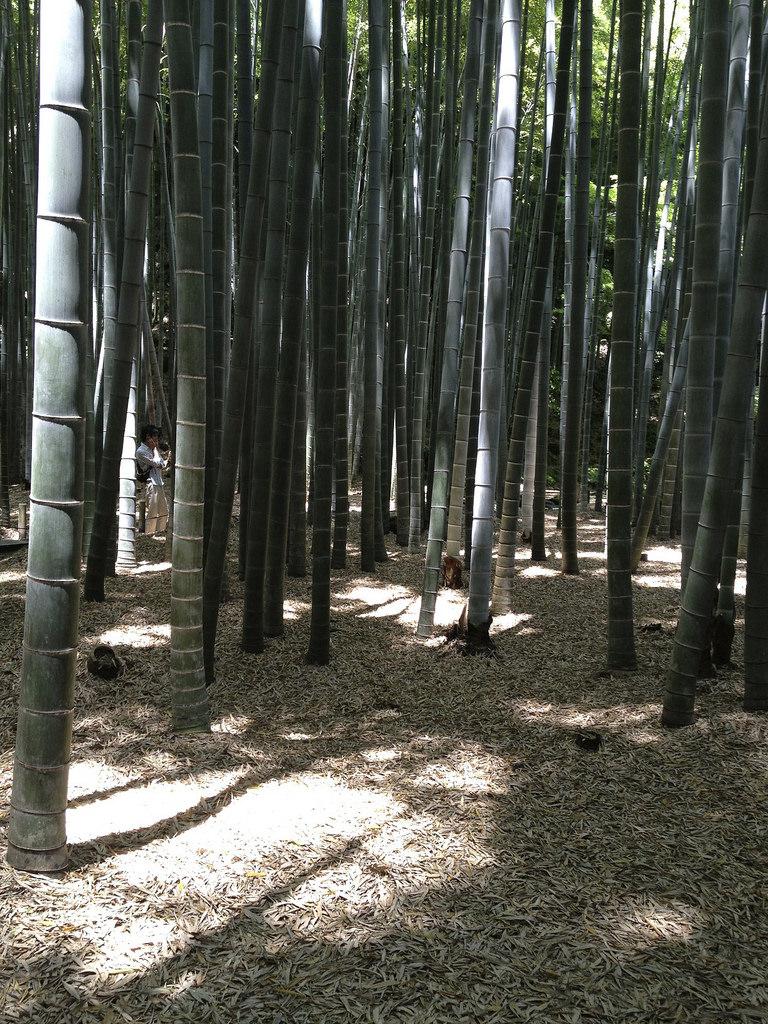 鎌倉 photo